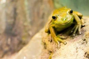 TEDx Dublin Best Talk Fergus McAuliffe Canadian Wood Frog